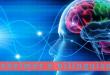 Alzheimer e bilinguismo - Villa Mafalda Blog
